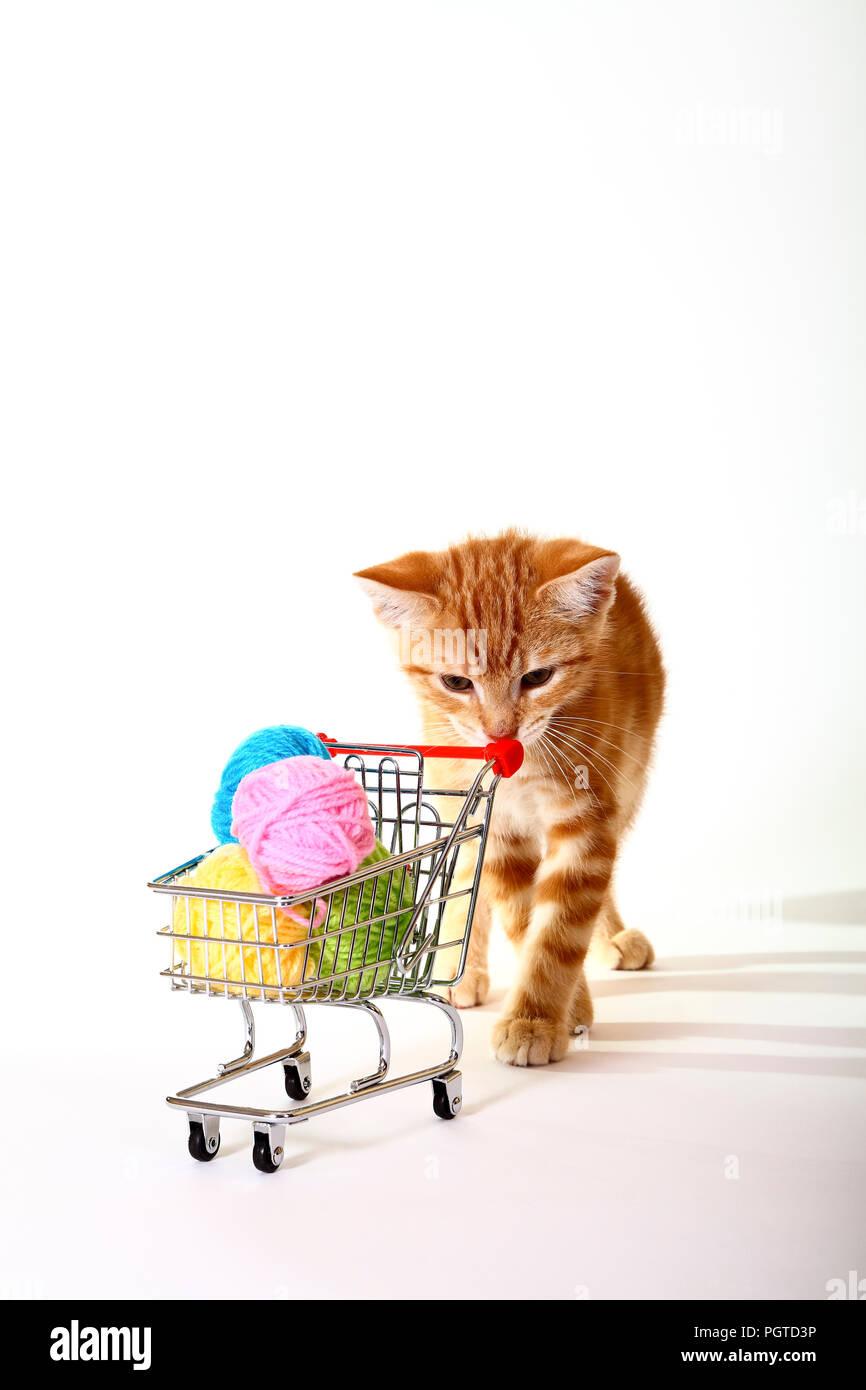 Le gingembre mackerel tabby chat jouant avec de la laine de balles dans un panier Banque D'Images