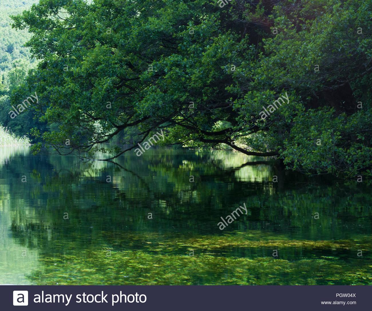 Tree grove frome l'eau. La nature peut toujours surprendre, et montrent à quel point il peut être beau, sauvage, weired et intéressant. Ohrid, Seint Naum (Macédoine) Photo Stock