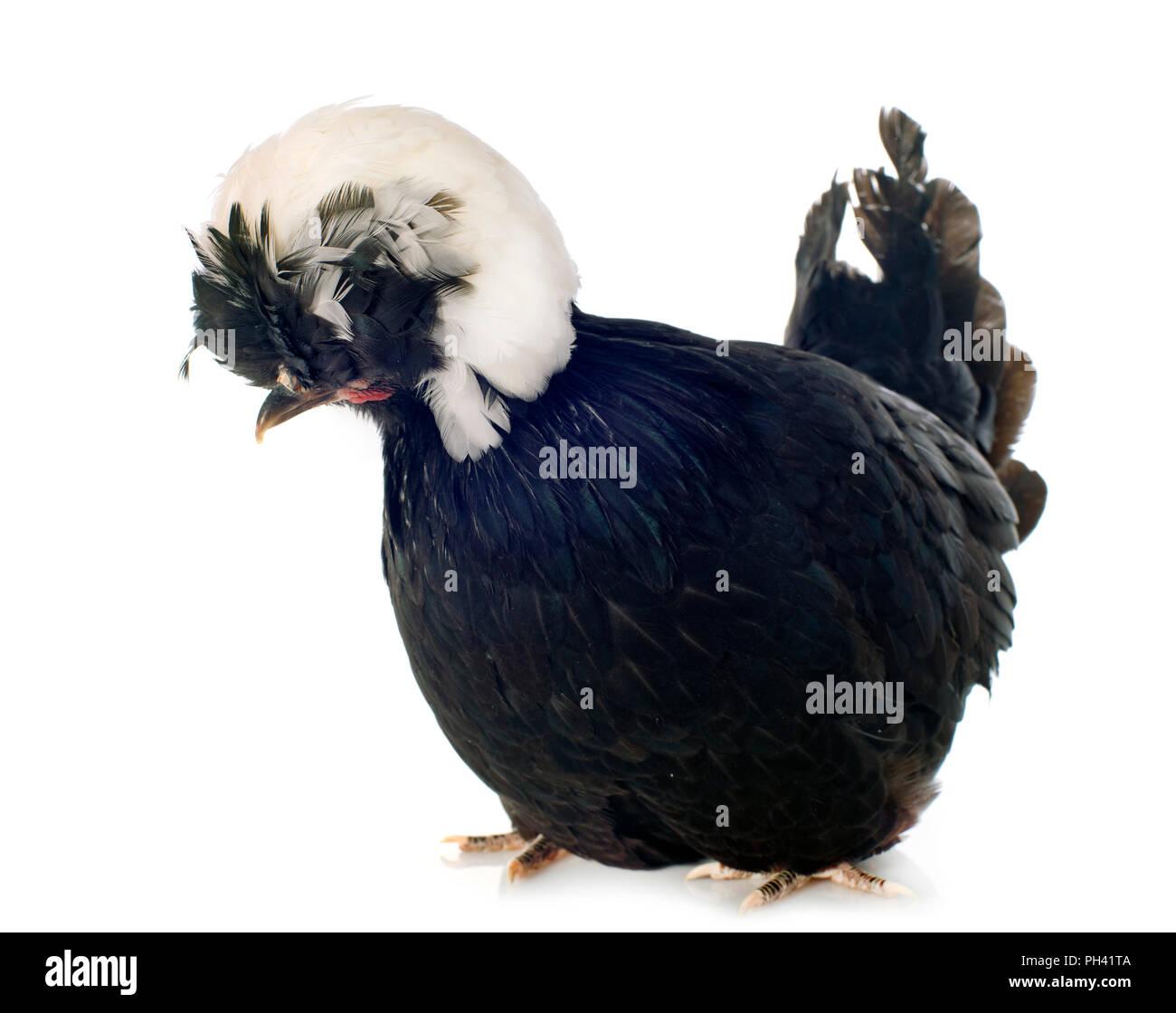 blanc adolescent gros noir coqs Hort porno