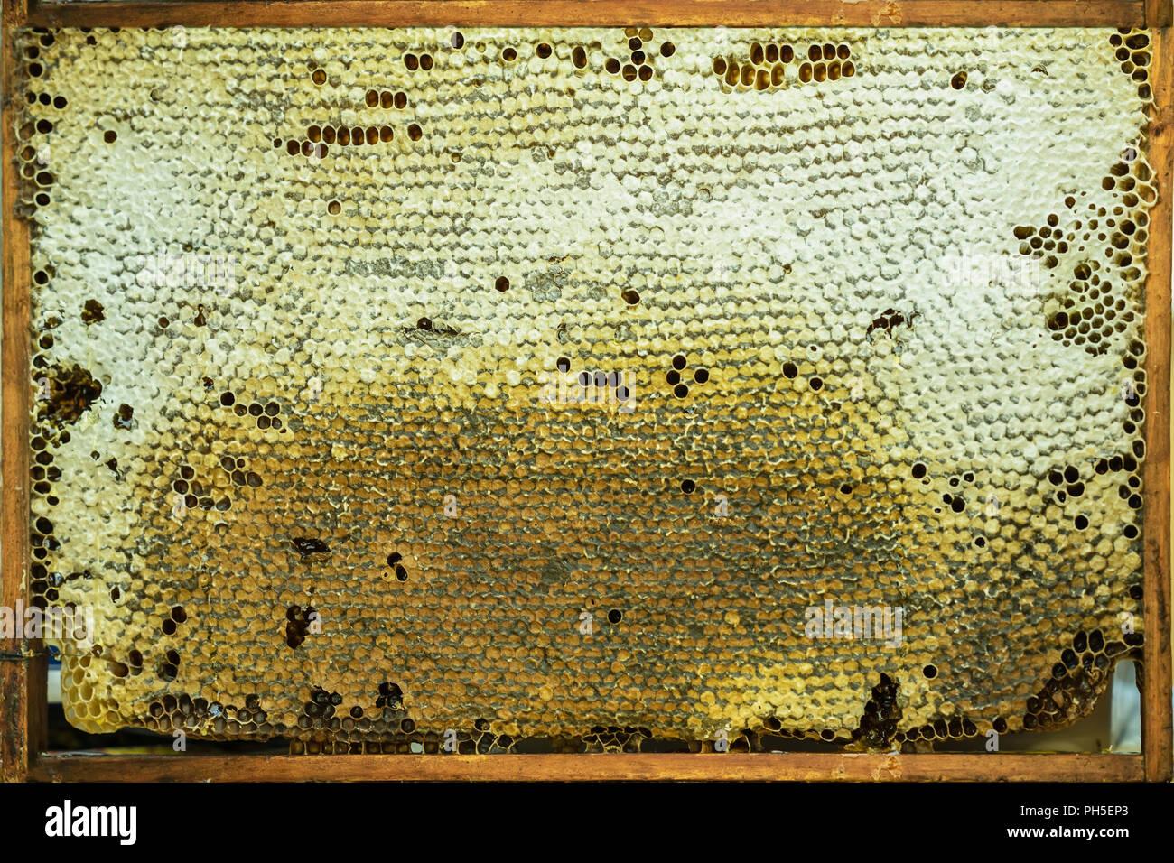 Fond Naturel De Miel Avec Miel Doré Structures De Cire Dans Le