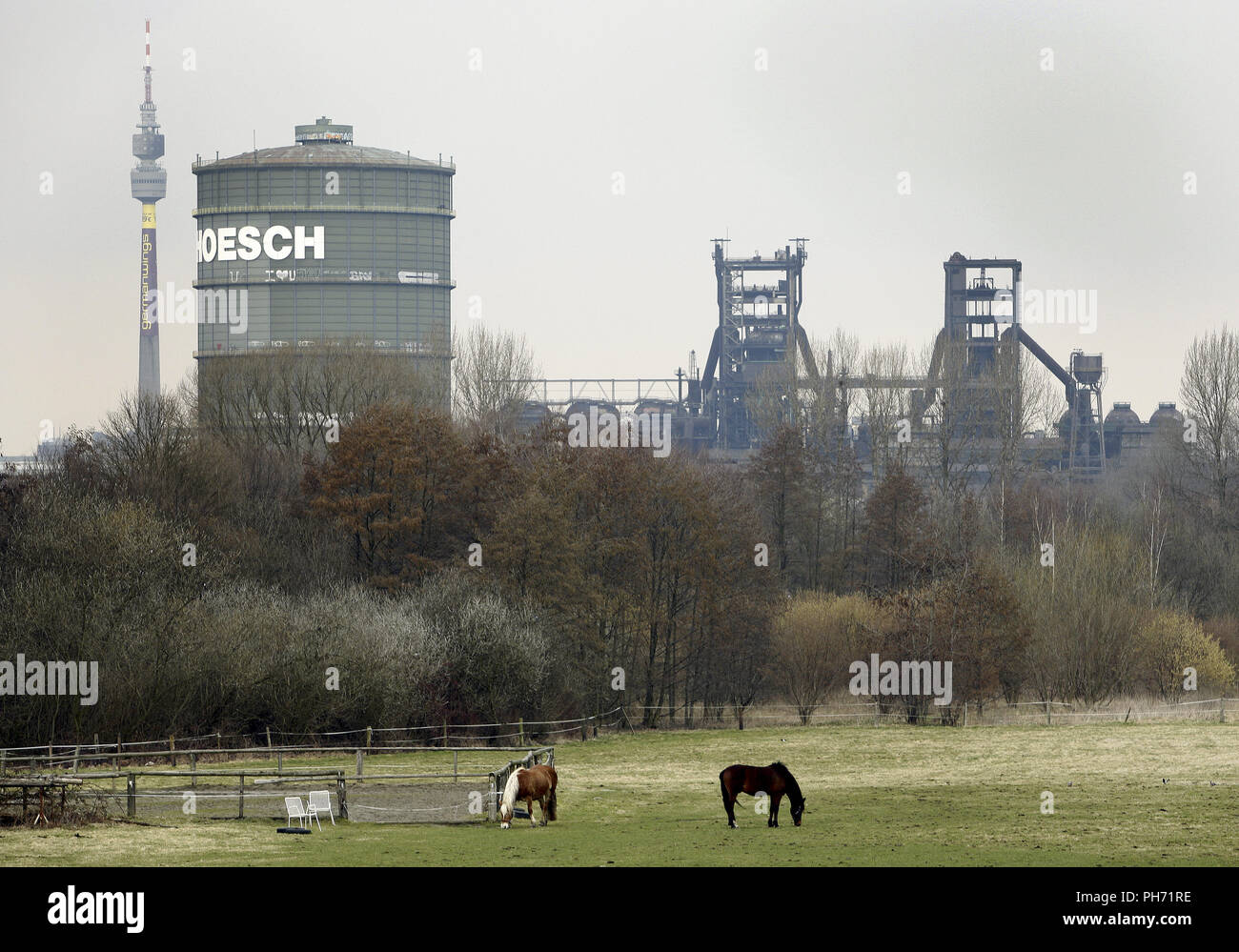 Les chevaux en face d'installations industrielles, Dortmund. Photo Stock