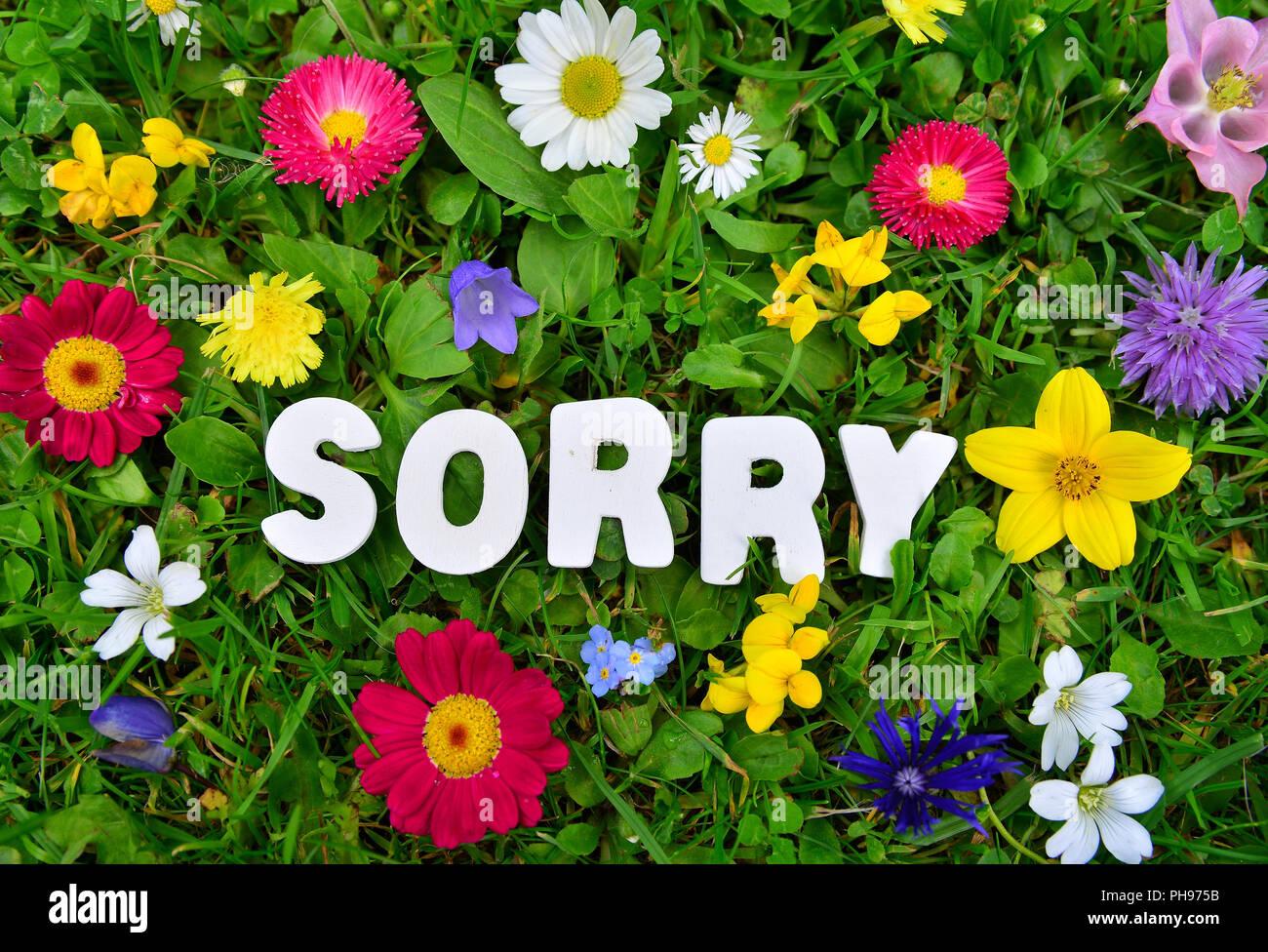 Désolés texte sur flower meadow Photo Stock