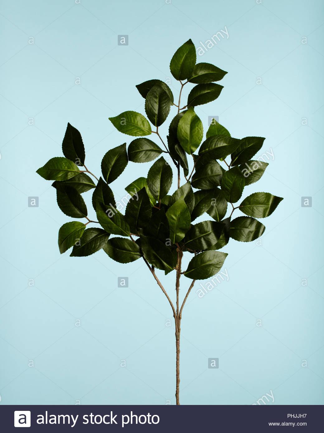 Avec des feuilles des rameaux Photo Stock