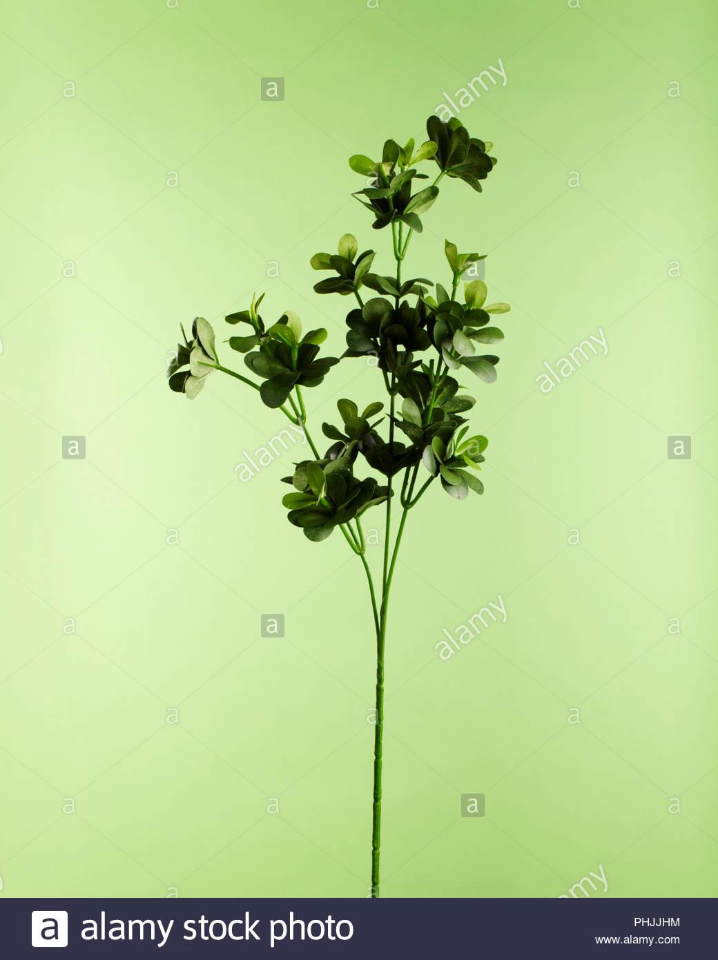 Les feuilles des rameaux Photo Stock
