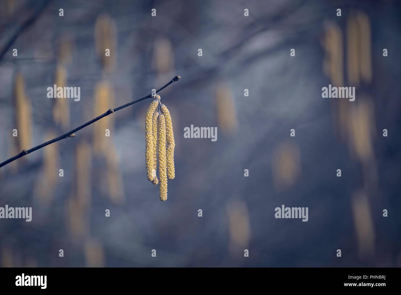 Direction générale de la solitaire avec des graines dans une ambiance d'hiver avare Photo Stock