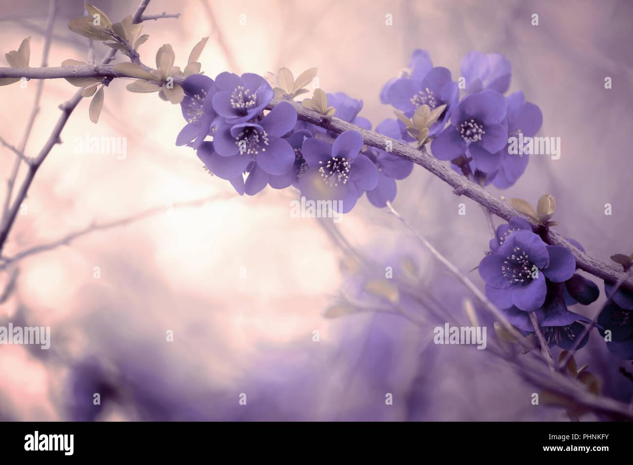 Avec la direction générale de l'ambiance pastel fleurs violet Photo Stock