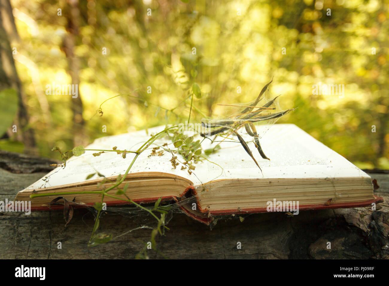 Livre ouvert sur fond de bois avec effet bokeh plante mystère magique dans l'arrière-plan Photo Stock