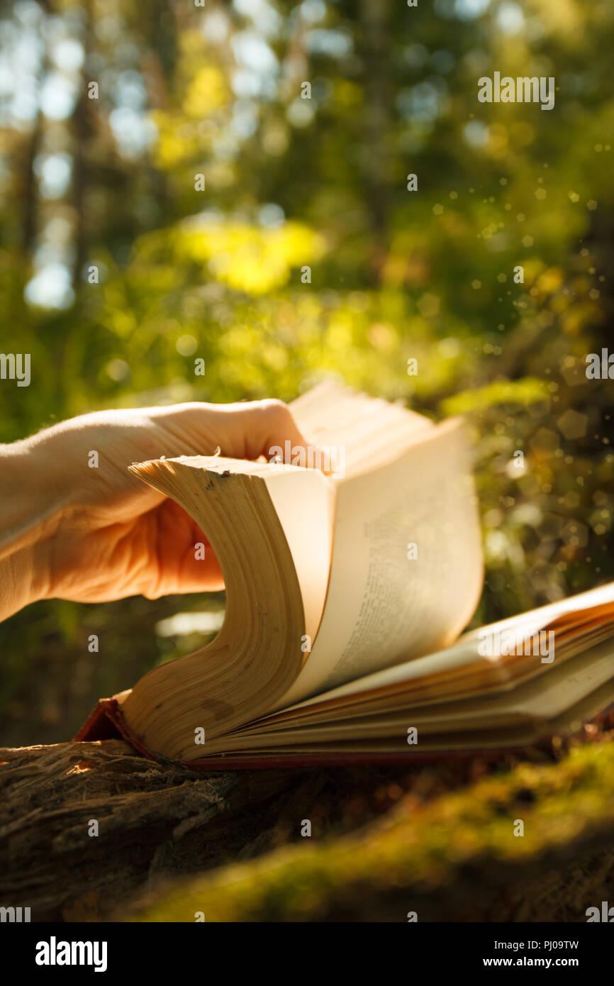Vieux livre de magie des lumières dans la forêt de conte, magie mystique sur fond de lumière vive Photo Stock