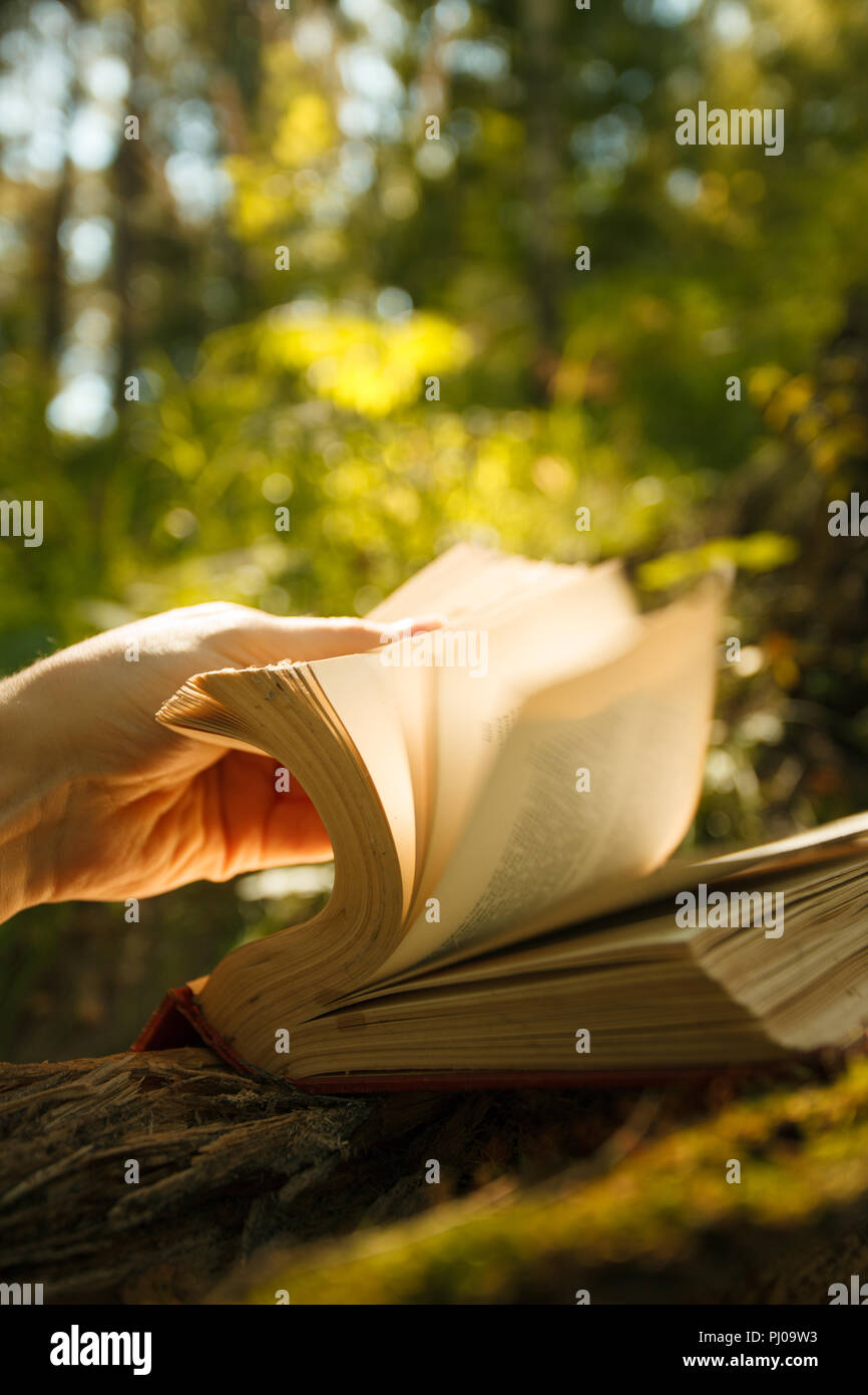 Vieux livre de magie des lumières dans la forêt féerique Photo Stock