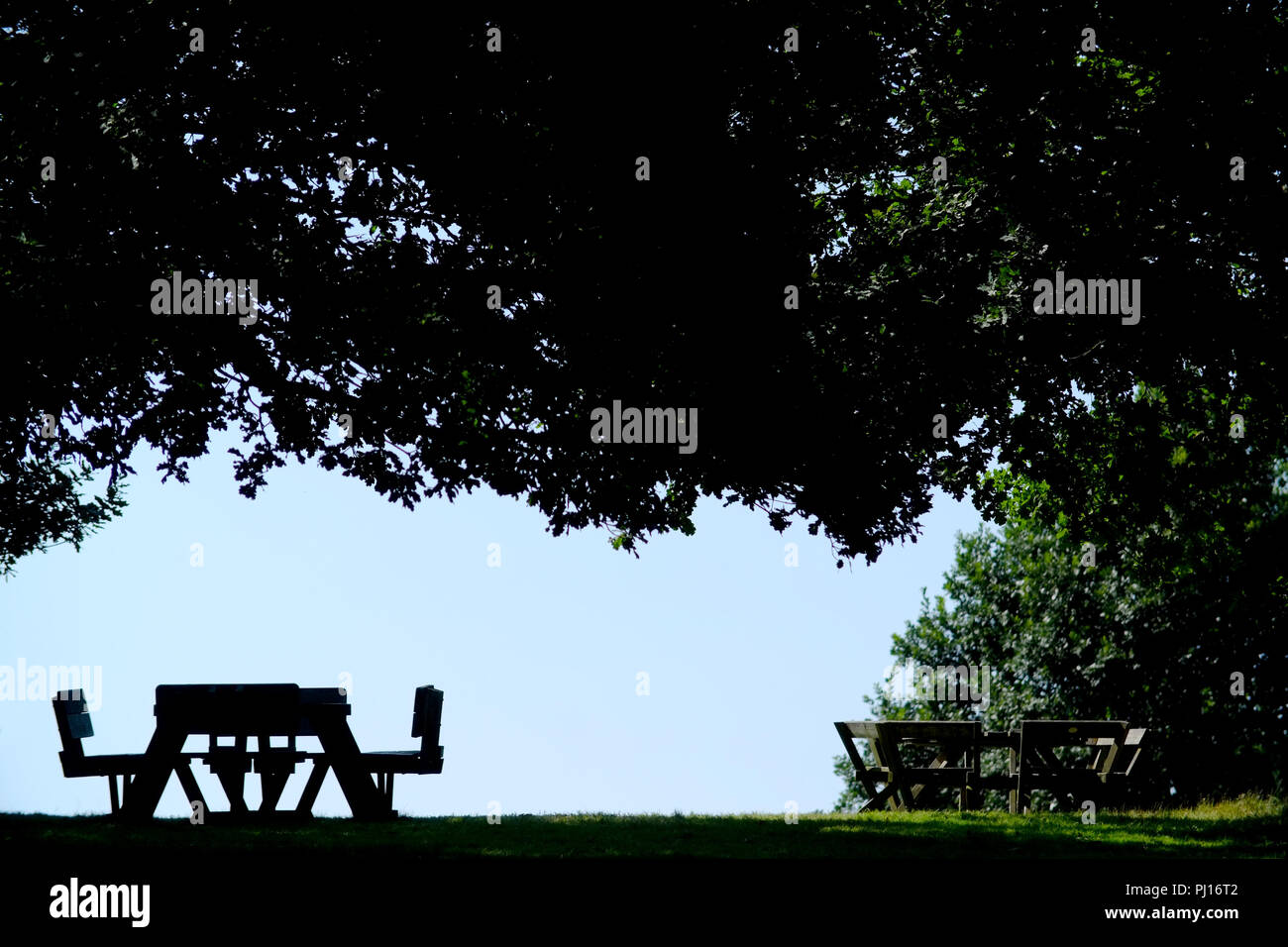 Table de pique-nique sous un arbre, silhouette. Photo Stock