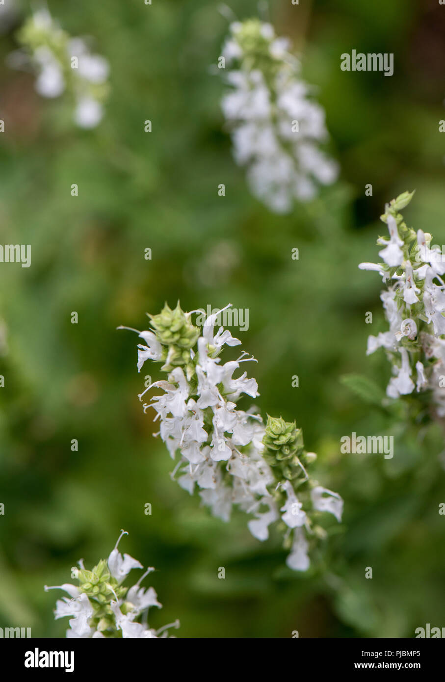 Bach Flower Remedy Photos Bach Flower Remedy Images Alamy