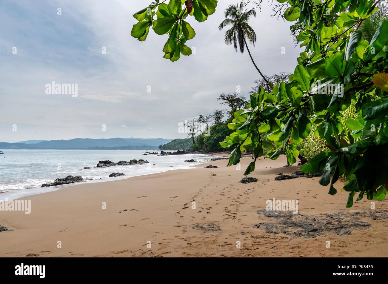 Plage, Parc national de Corcovado, péninsule d'Osa, au Costa Rica Photo Stock