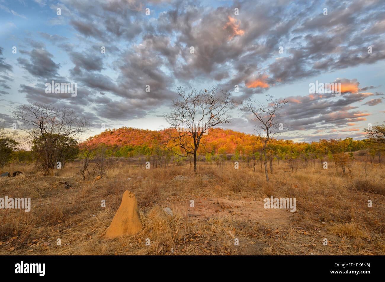 Lever du soleil de l'atmosphère dans l'Outback à Chillagoe, le nord du Queensland, Queensland, Australie Photo Stock