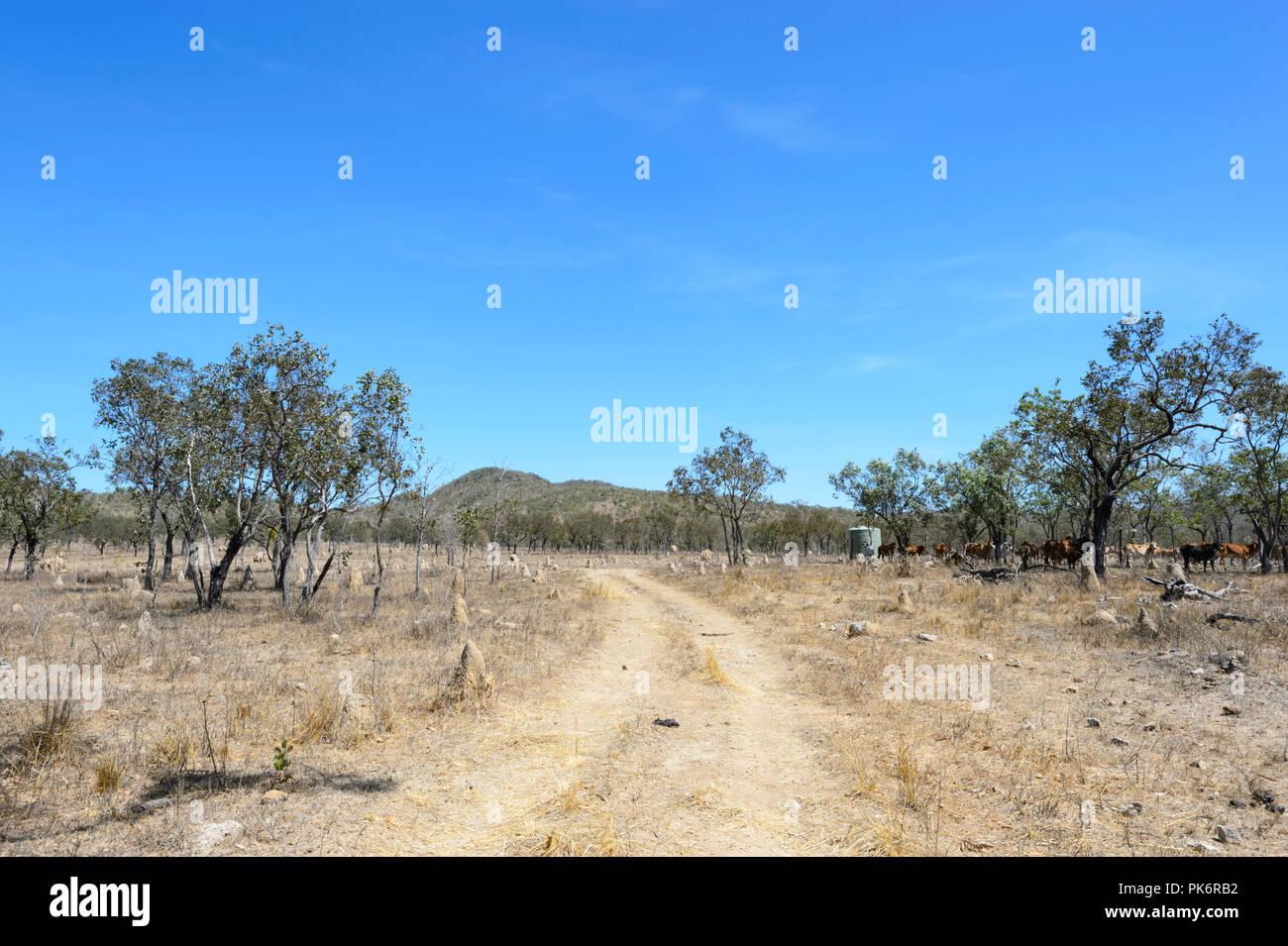 La sécheresse sur une ferme de bétail, le nord du Queensland, Queensland, Australie Photo Stock
