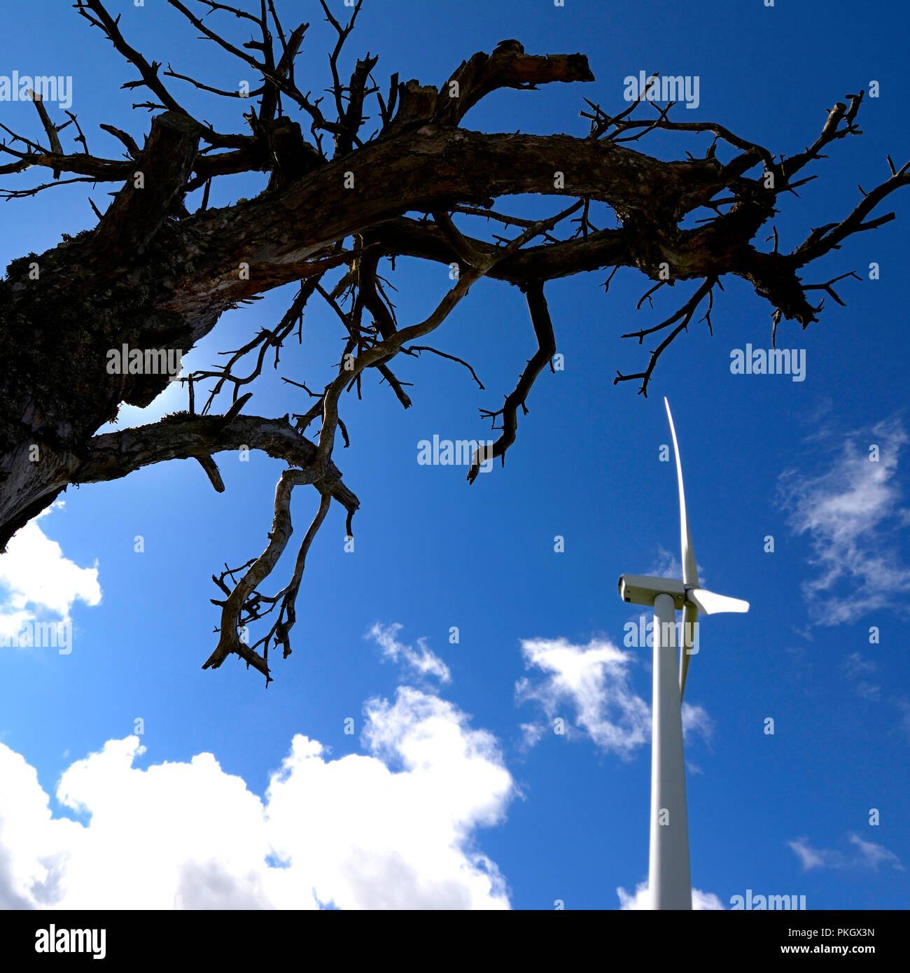 Vue de dessous du haut d'un arbre mort et d'une éolienne sur un fond de ciel bleu, département Puy de Dome, Auvergne Rhone Alpes, Fran Photo Stock