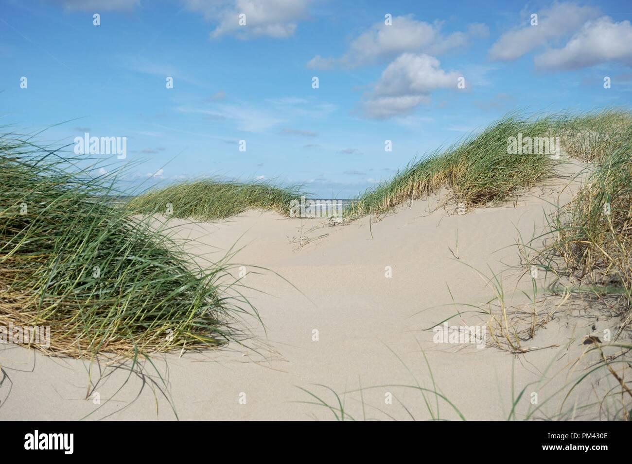 Avec l'herbe des dunes de sable à la mer noth Banque D'Images
