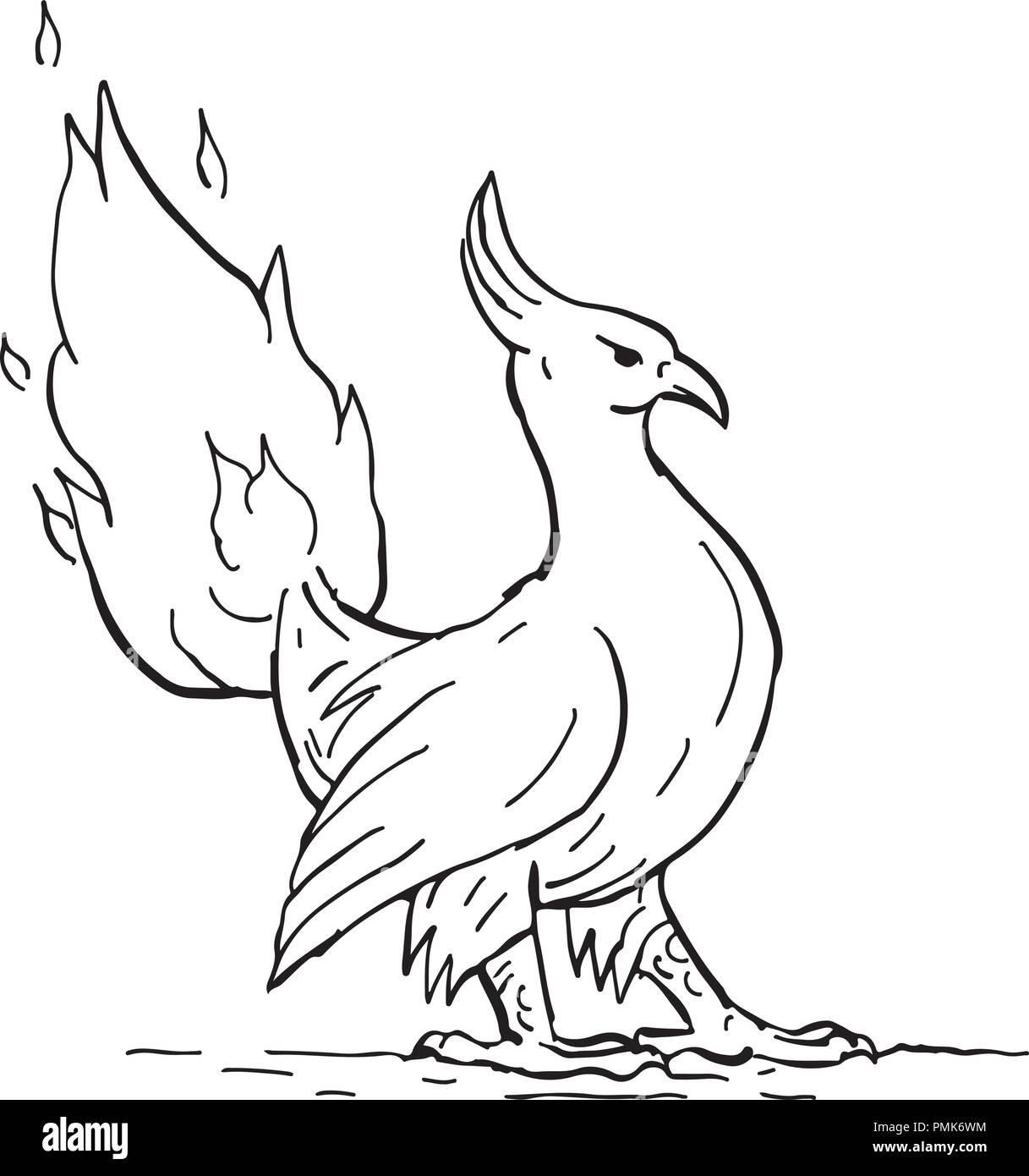 Croquis Dessin Illustration D Un Style Un Phoenix Dans La Mythologie Grecque Un Oiseau A Longue Duree De Vie Qui Se Regenere De Maniere Cyclique L Obtention D Une Nouvelle Vie Par L Augmentation De Image