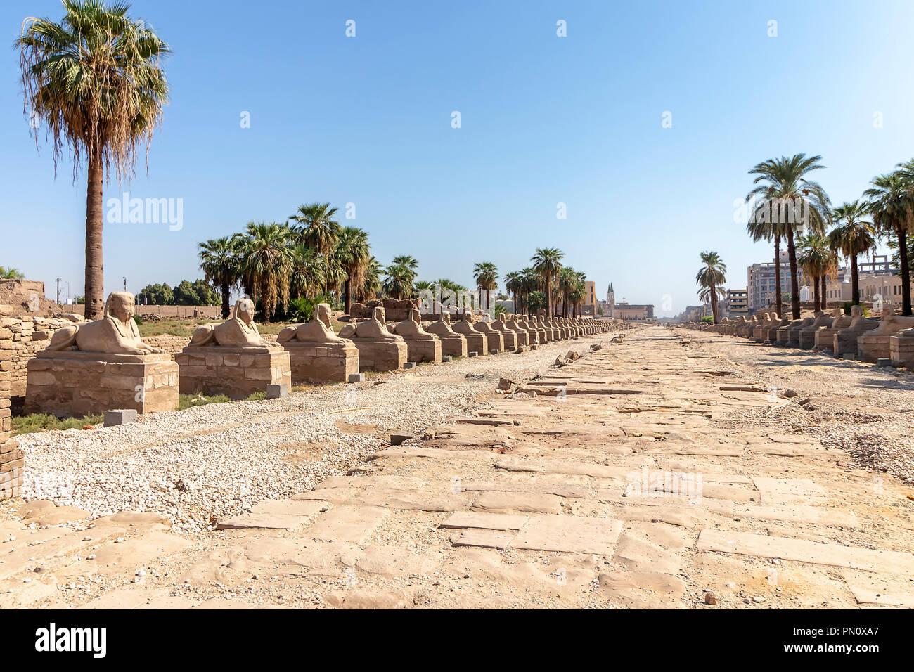 Sphinx road à l'entrée du temple de Louxor, un grand complexe de temples de l'Égypte ancienne située sur la rive est du Nil, dans la ville aujourd'hui connue sous Photo Stock