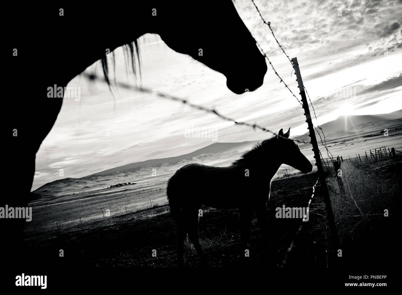 Silhouette de cheval Photo Stock