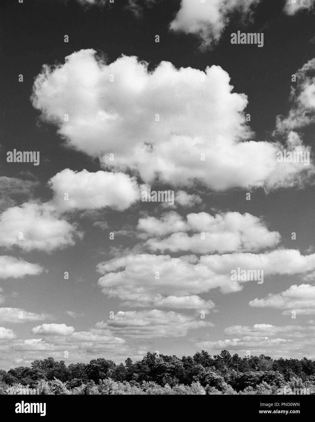 1980 PUFFY NUAGES DANS ciel au-dessus de la cime des arbres - c12334 KRU001 NOIR ET BLANC HARS Photo Stock