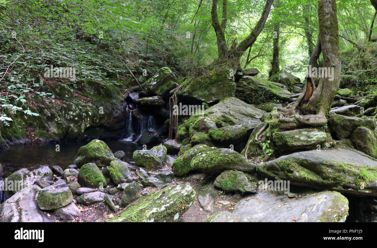 Il s'agit d'une mousse couverts rocky cascade et quelques arbres dans la luxuriante forêt de Fragas do Eume del épais, avec des arbres avec des racines dans les rochers, Espagne Photo Stock