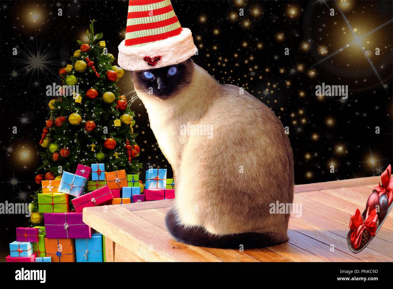 Noel Drole Et Mignon Chat Sur Une Table Portant Un Chapeau Elf A Rayures Avec Fond De Noel Photo Stock Alamy