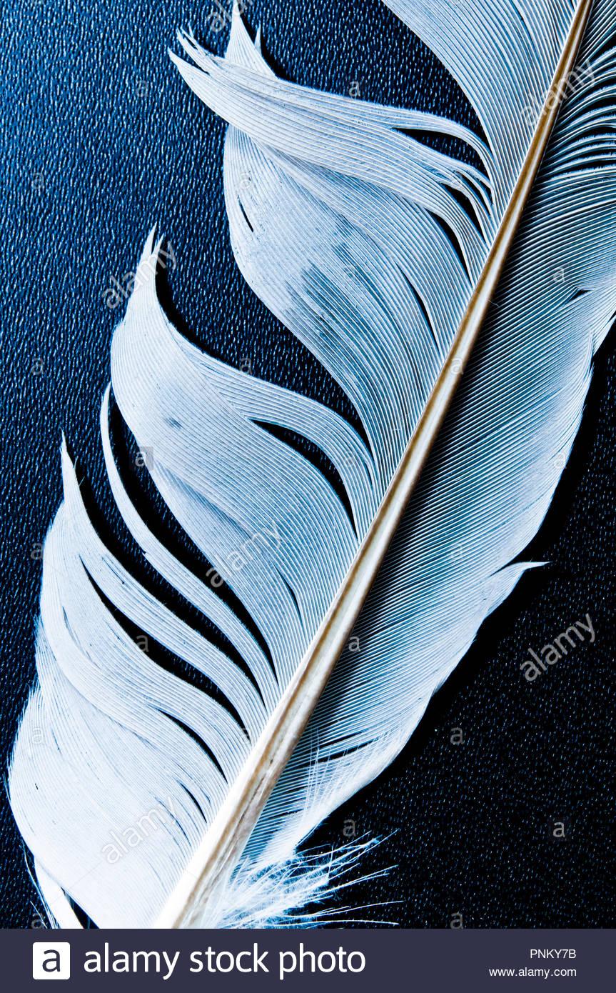 Gros plan d'une plume d'oiseau Photo Stock
