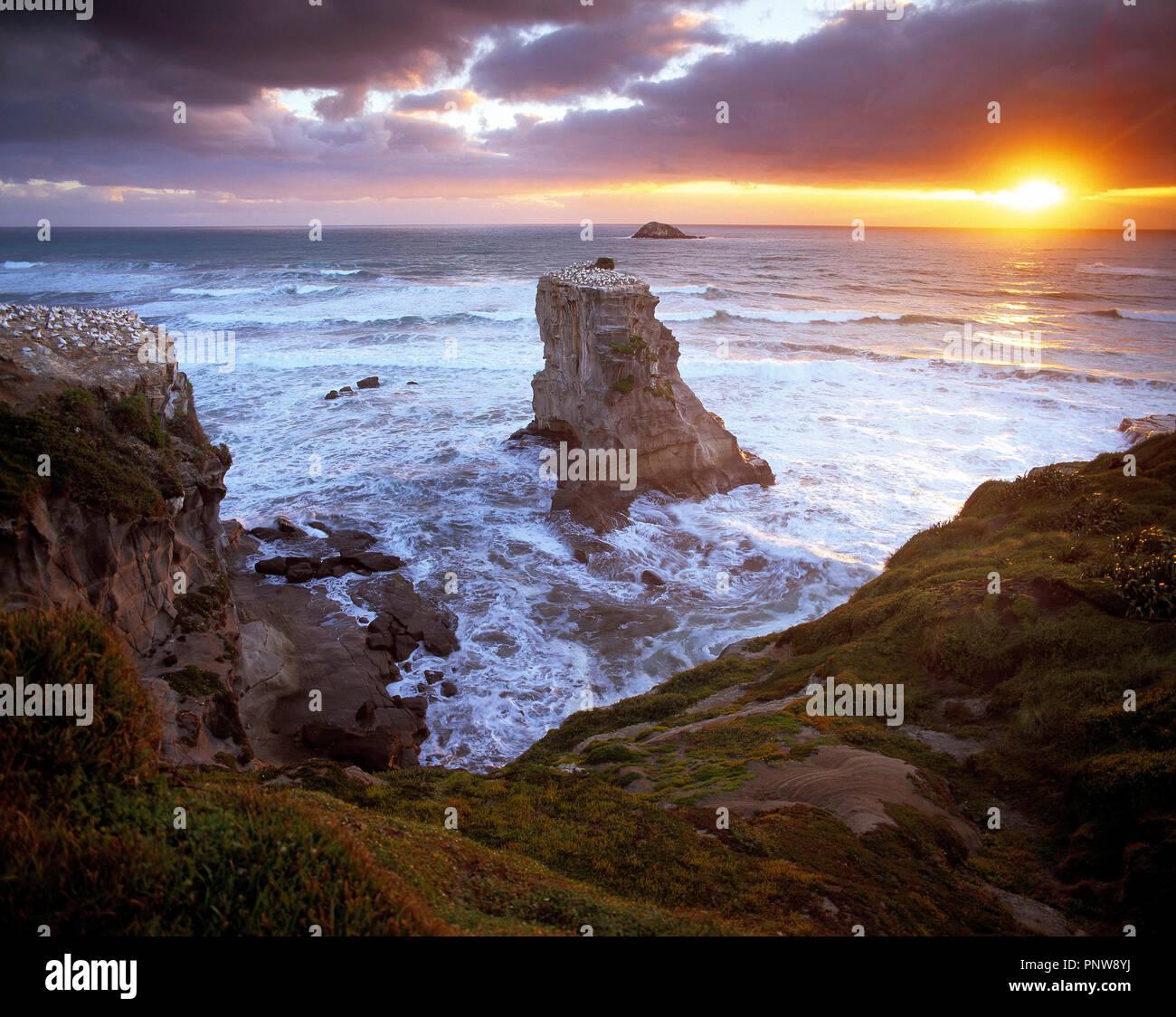 La Nouvelle-Zélande. L'Île du Nord. Région d'Auckland. Muriwai Beach. Photo Stock