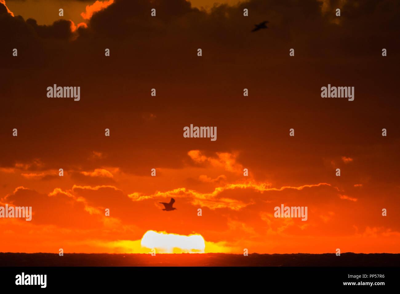 qui est GG de Shahs de coucher de soleil datant