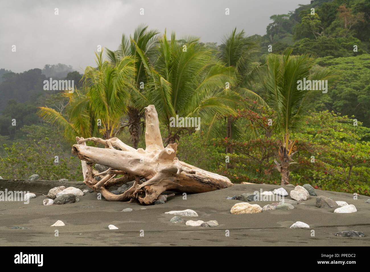 Scènes de plage, parc national de Corcovado, péninsule d'Osa, au Costa Rica Photo Stock