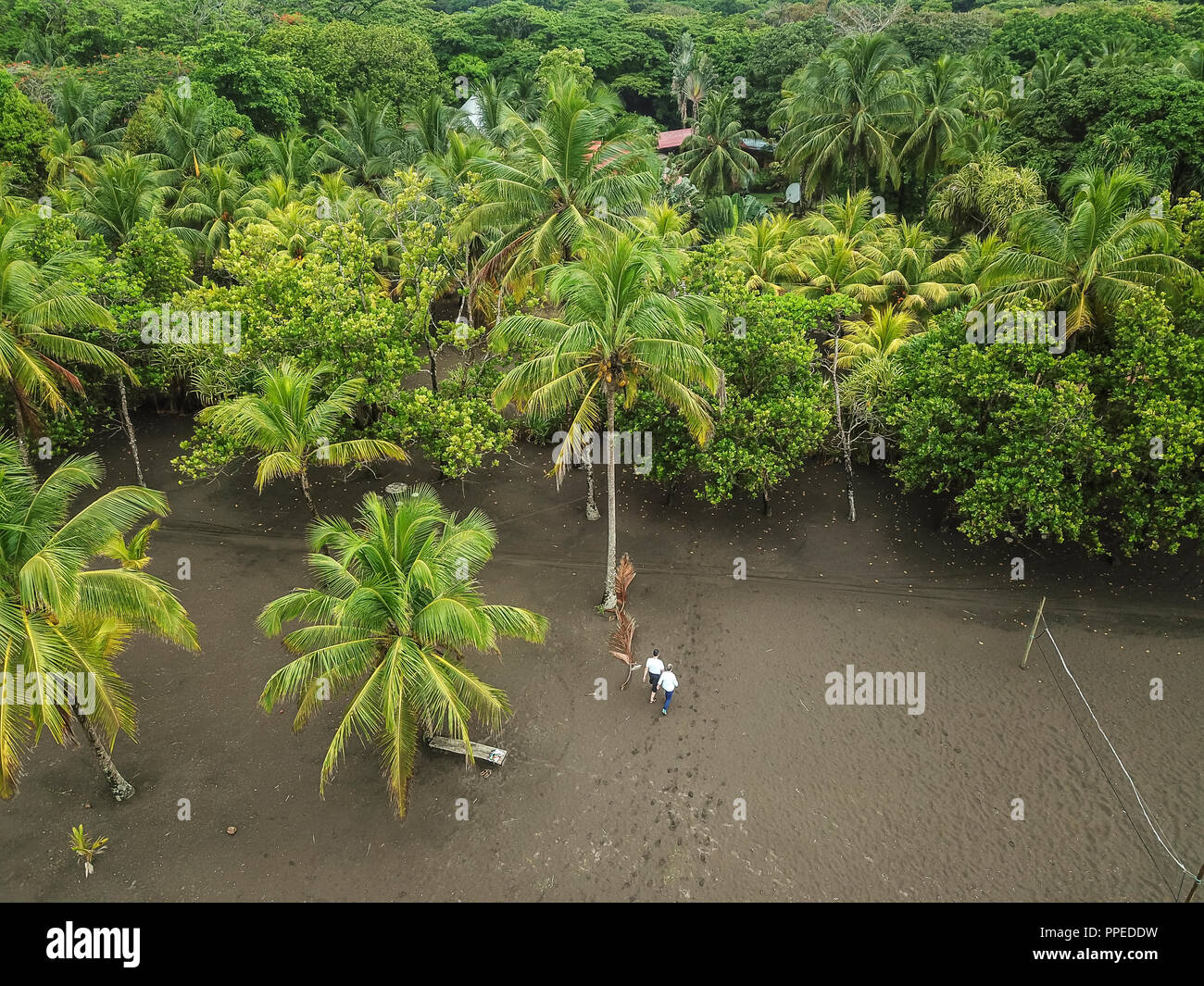 Parc National de Tortuguero, Costa Rica Photo Stock