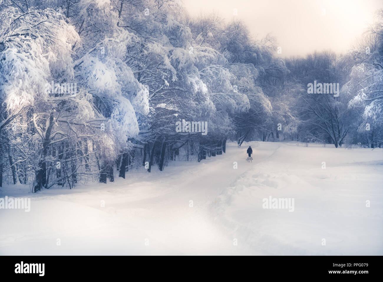 Silhouette solitaire marche sur route enneigée en hiver dans le parc de la forêt d'Arbres enneigés dans de doux tons mauve bleu Photo Stock