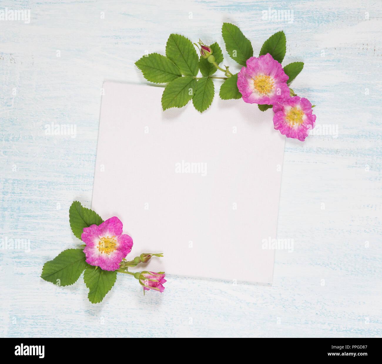 Page d'album de mariage ou un album photo de famille, bâti avec wild rose et vert feuilles sur fond de bois clair; haut Vue, télévision lay, overhead view Photo Stock