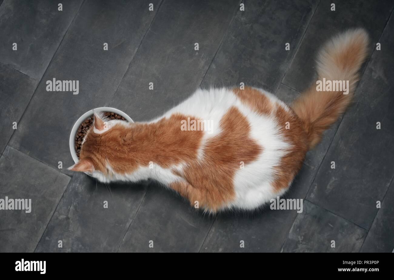 Chat tigré vu de dessus en mangeant d'un bol alimentaire blanc sur un sol en pierre sombre. Photo Stock