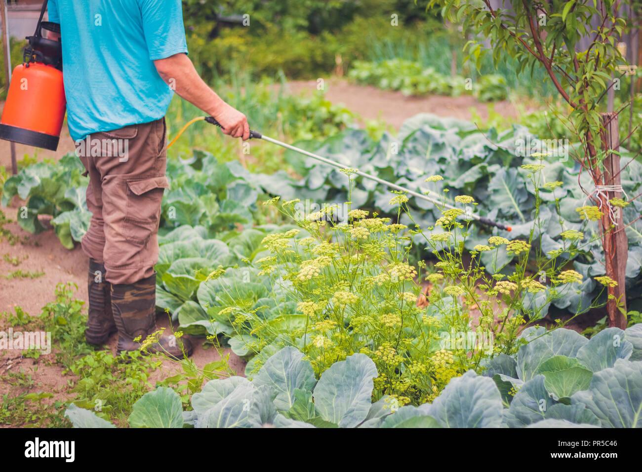 Maladies De Jardin Photos & Maladies De Jardin Images - Alamy