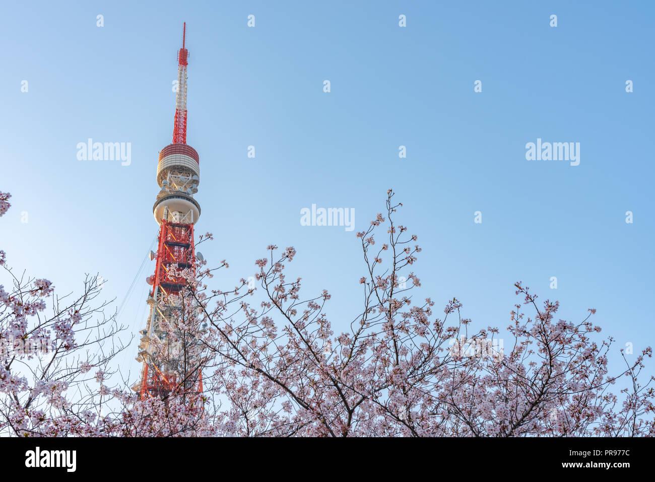 La tour de Tokyo et Sakura cherry blossom dans la saison du printemps à Tokyo, Japon. Photo Stock