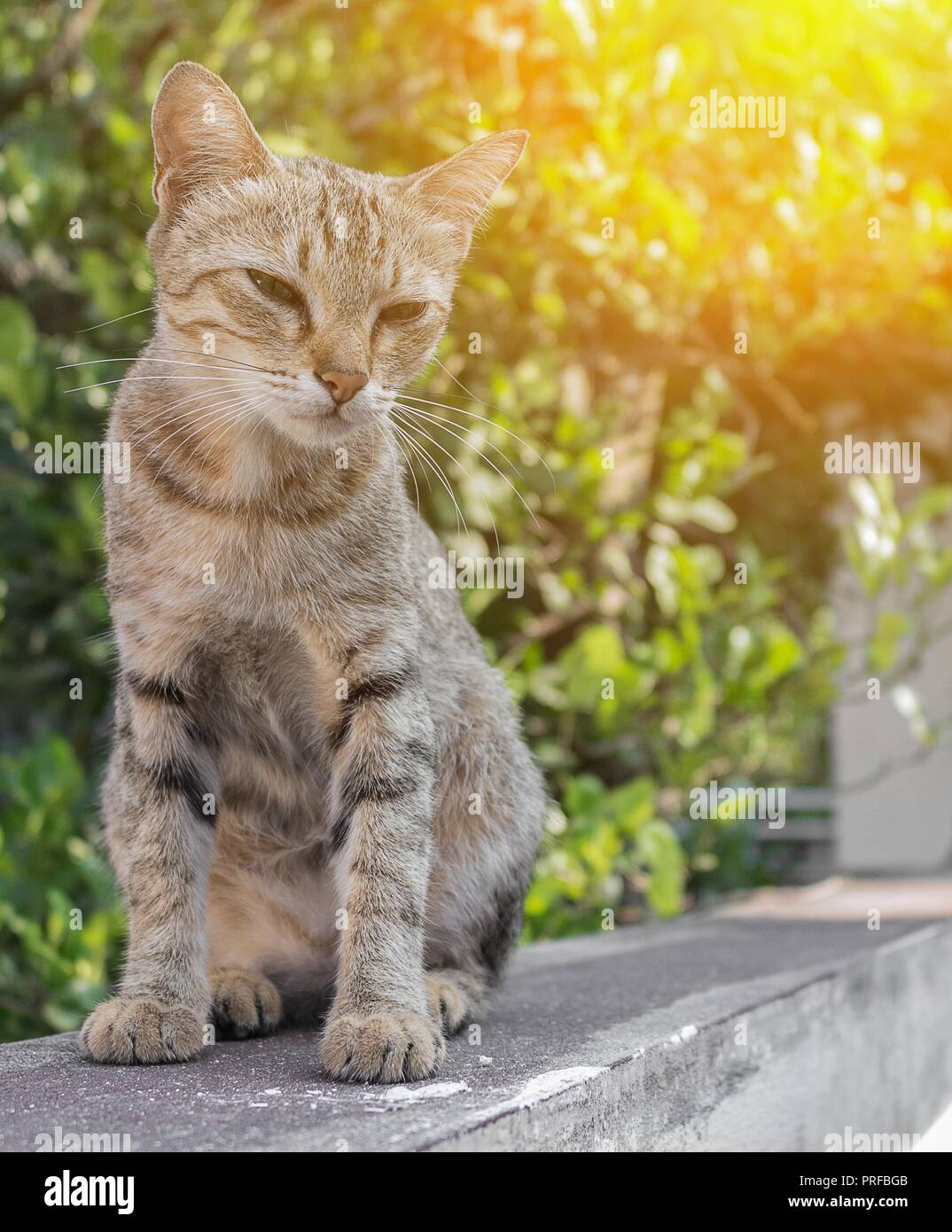 Chat, gris avec des yeux tristes. pitoyable et pittoresque arrière-plan flou avec coucher du soleil ton léger. Photo Stock