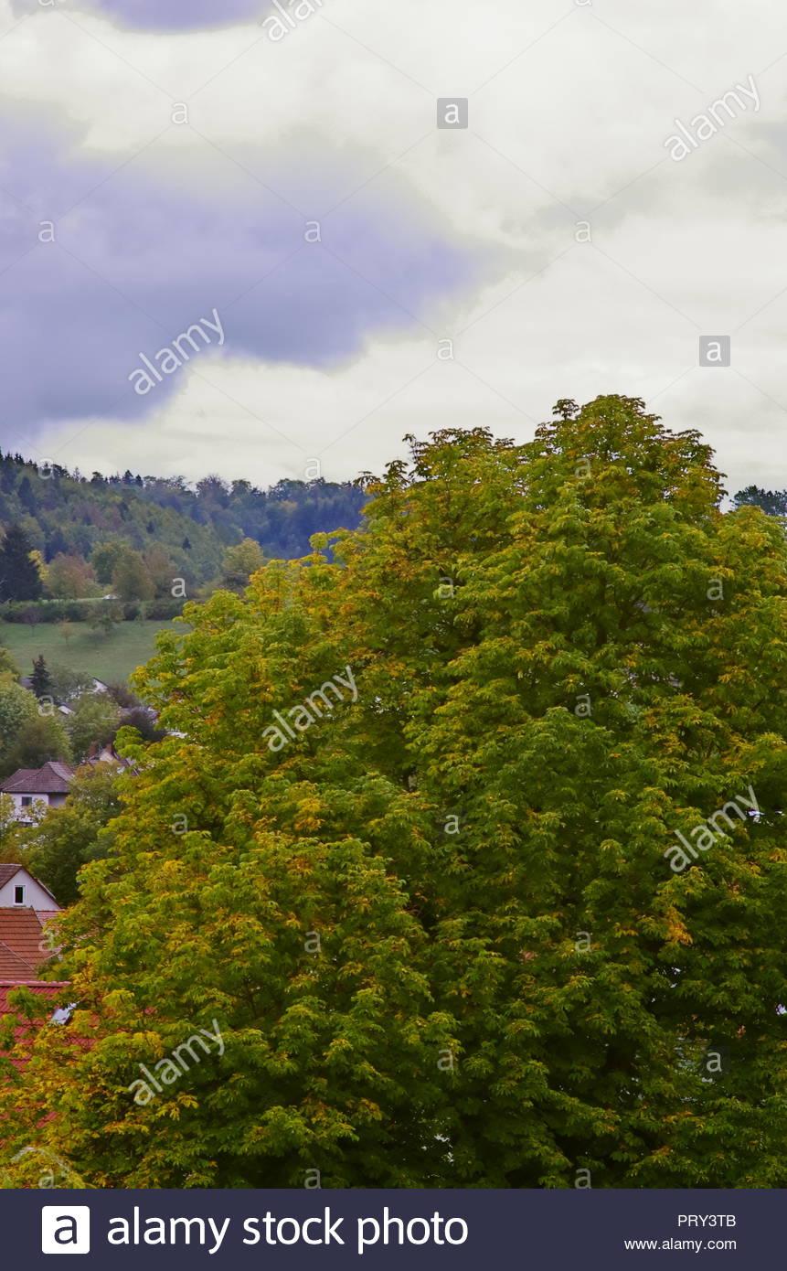 Un paysage de ville, de maisons et d'arbres, avec la nature Photo Stock