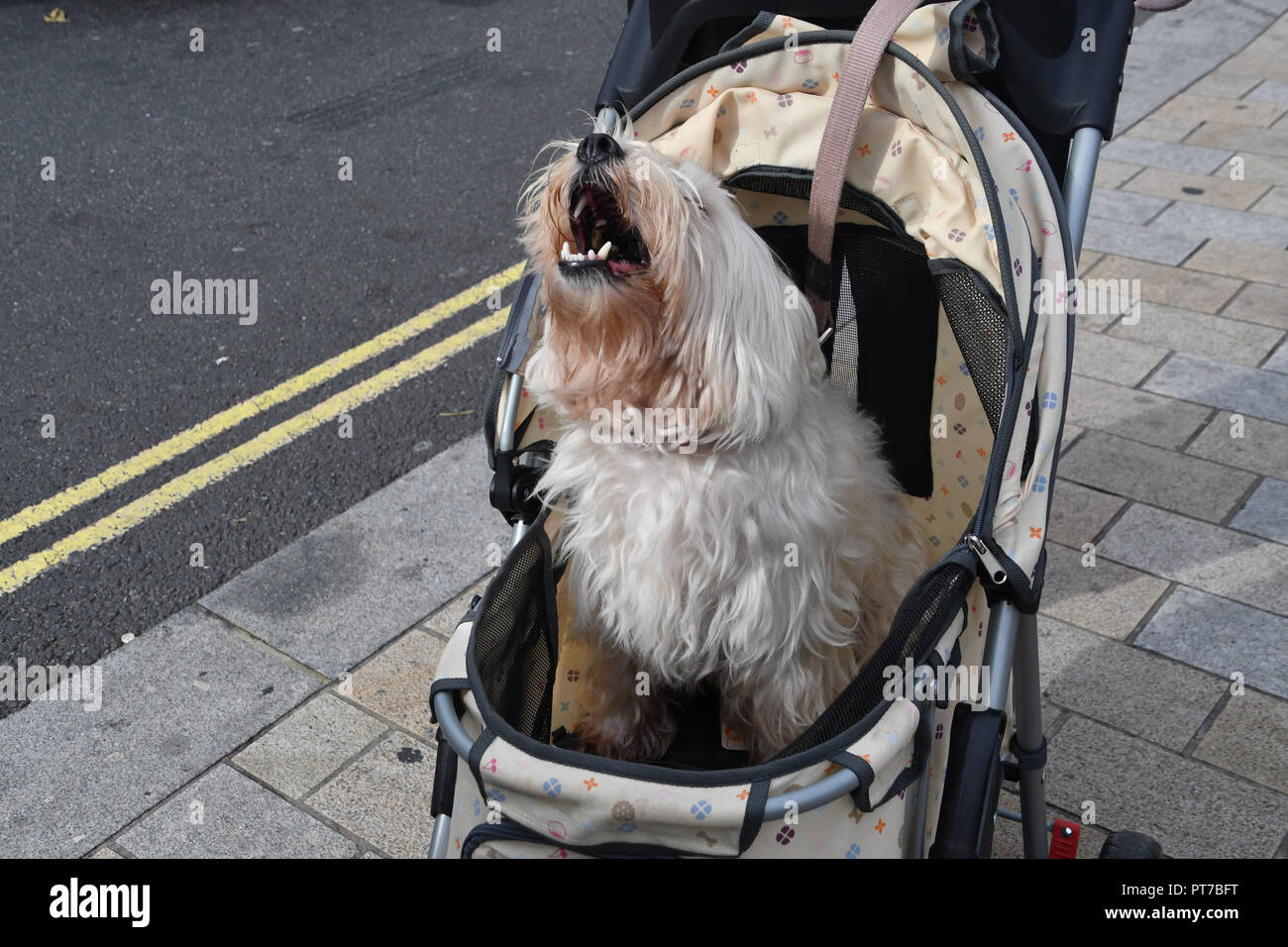 Doggy Dating Londres
