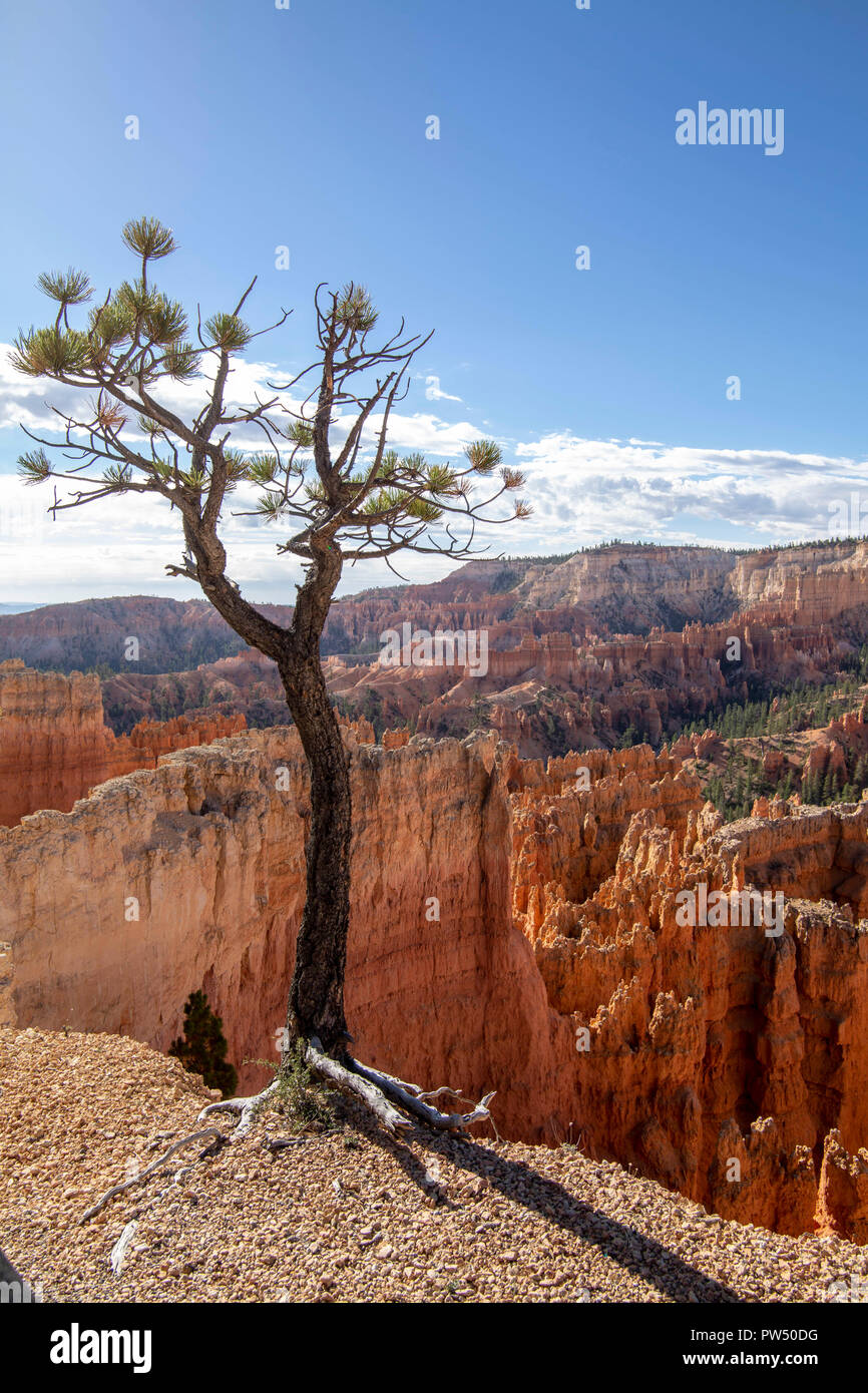 Bryce Canyon dans l'Utah Photo Stock