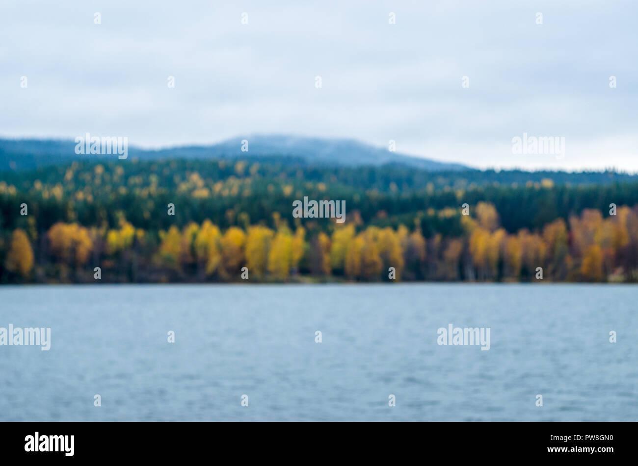Arrière-plan flou- automne paysage norvégien (forêt boréale avec arbres jaunes). Banque D'Images