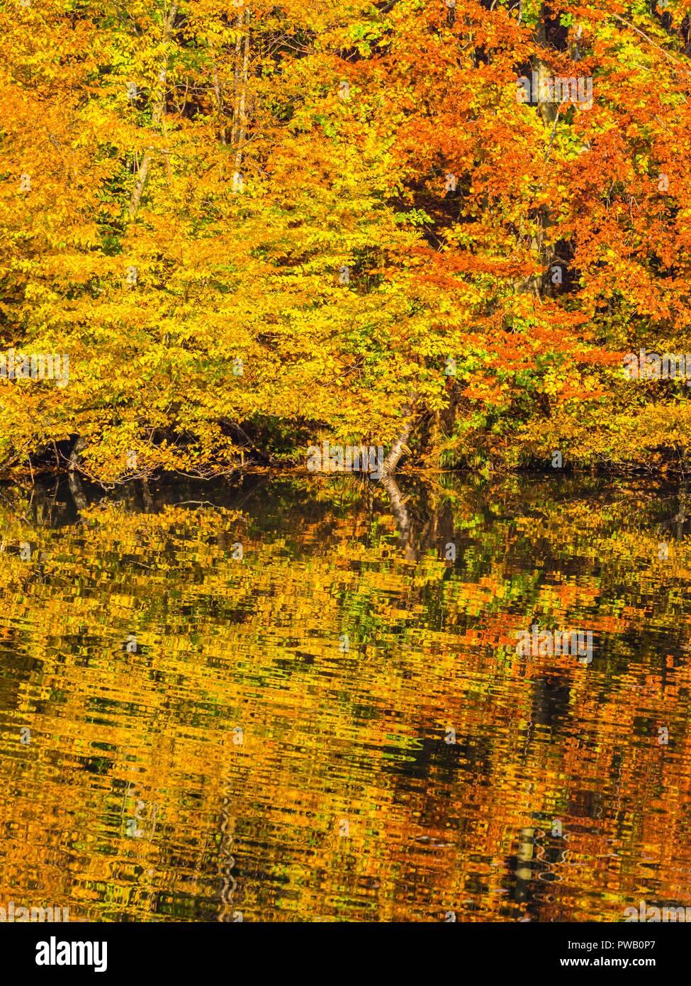 Décor de l'automne dans la nature Brod na Kupi en Croatie Banque D'Images