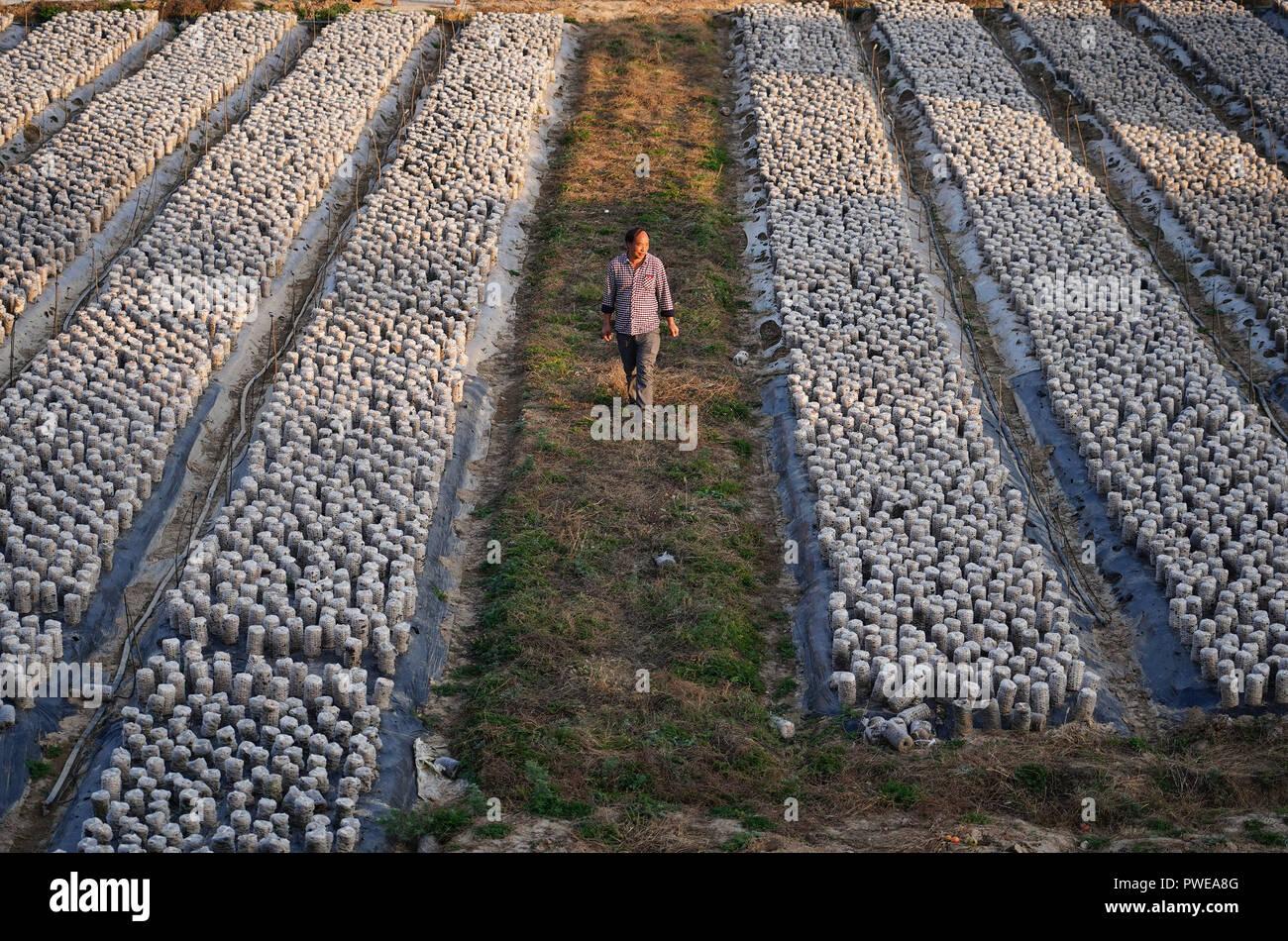 Que Planter En Octobre Sous Serre luochuan, province de shaanxi en chine. 15 oct, 2018