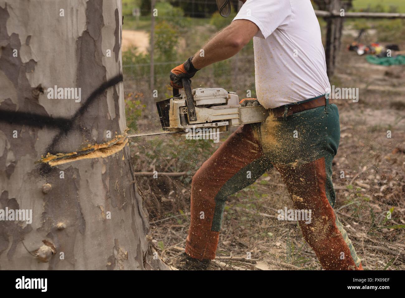Bûcheron couper arbre dans la forêt Banque D'Images
