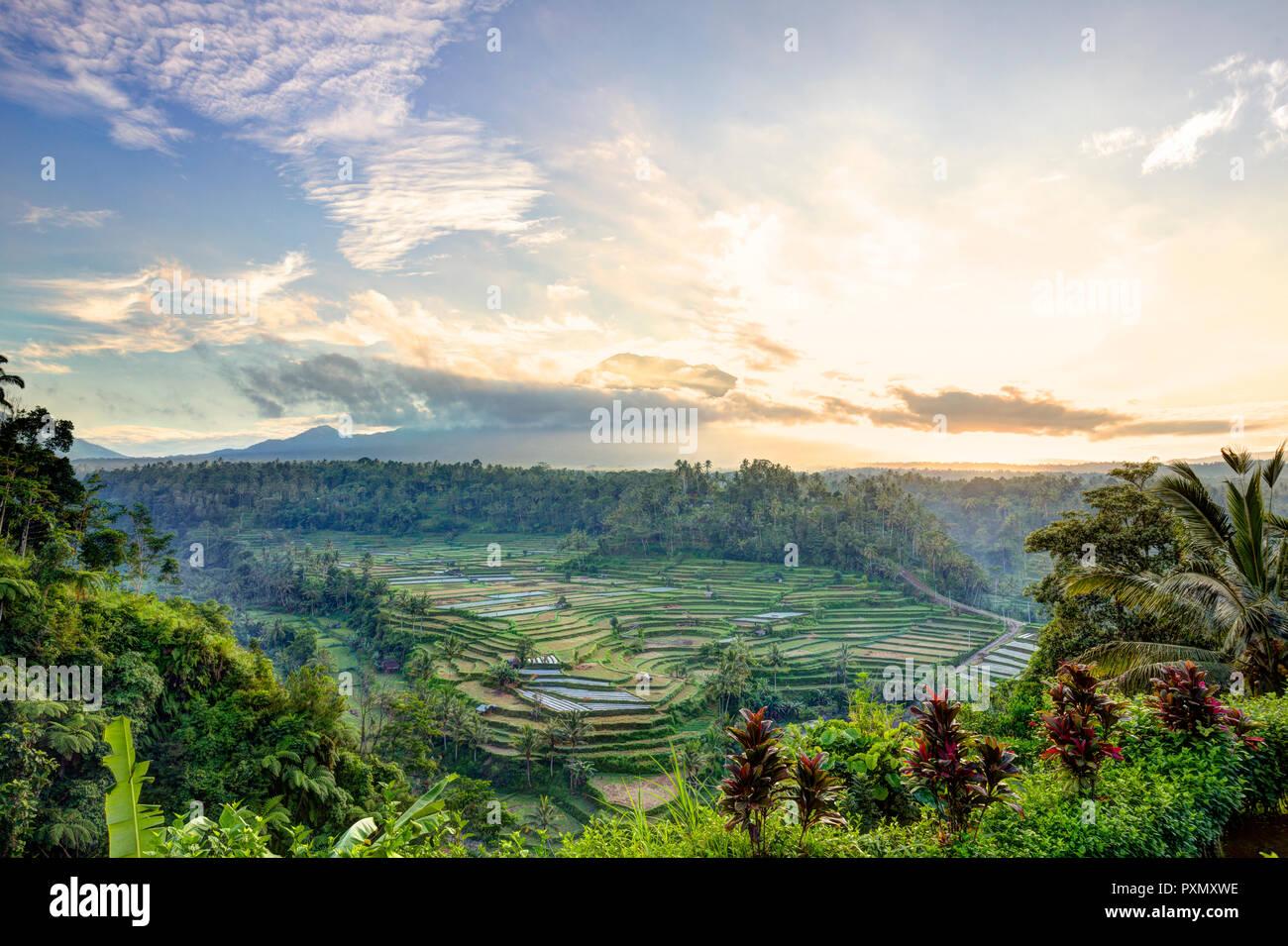Vue sur les rizières en terrasse et le volcan Gunung Agung au lever du soleil, Rendang, Bali, Indonésie Photo Stock