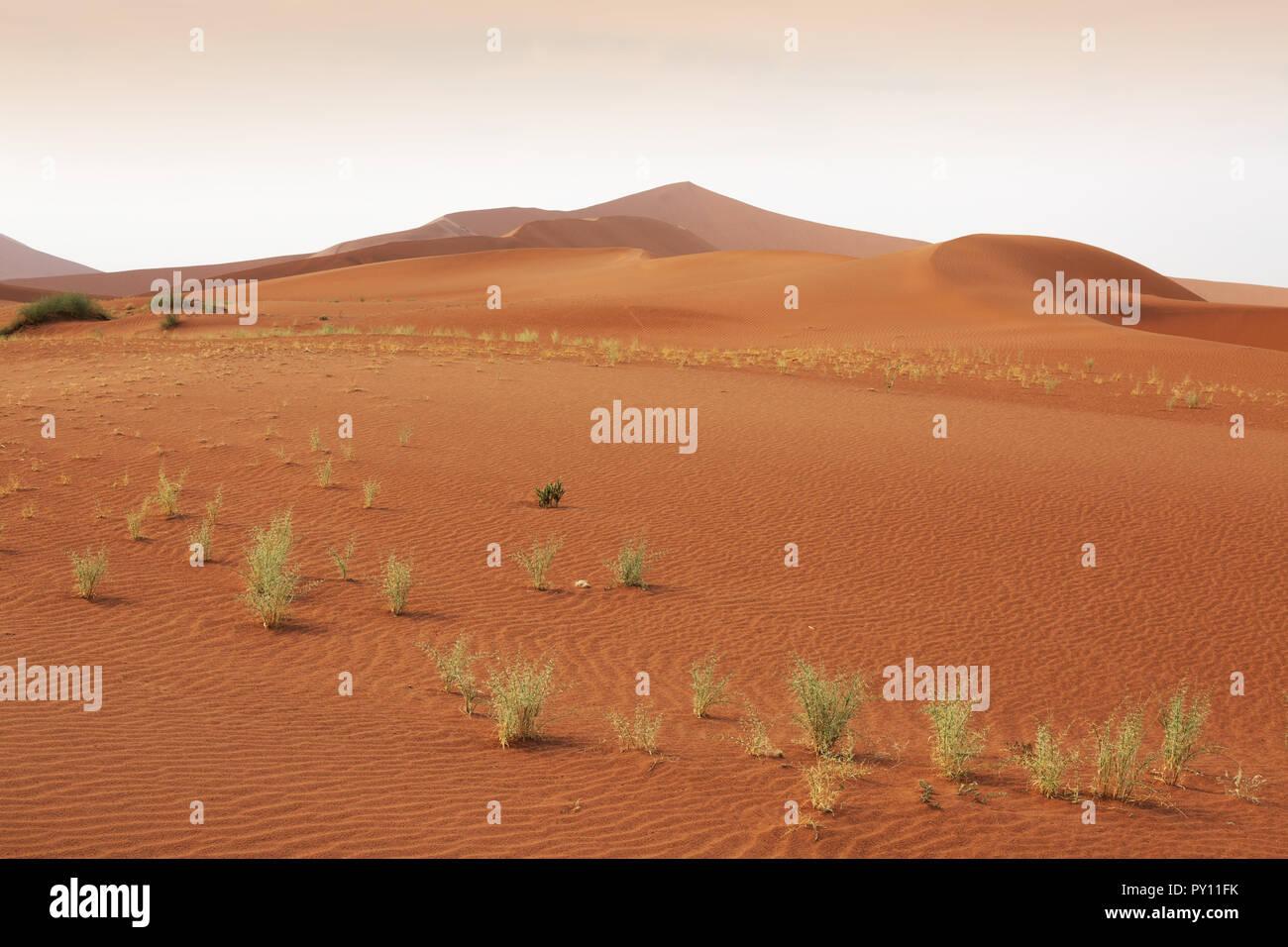 La Namibie dunes de sable dans le désert du Namib à Sossusvlei Namibie Afrique du Sud Banque D'Images