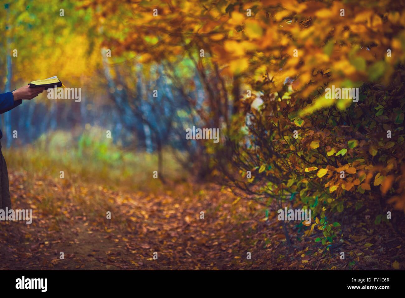 La lecture de la Bible dans une forêt d'automne Banque D'Images