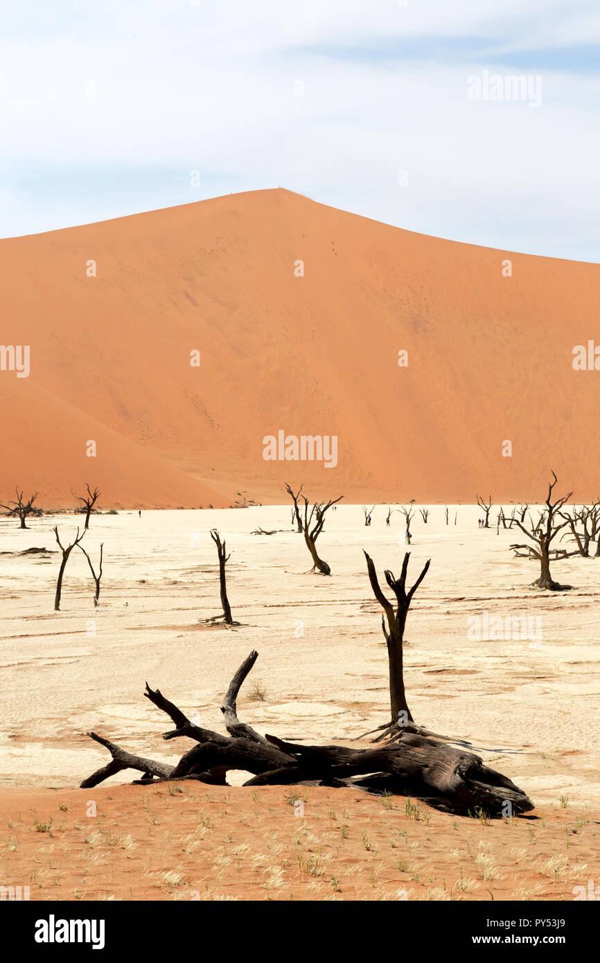 Deadvlei Namibie - arbres morts pour 8000 ans dans les dunes du désert du Namib, le Namib Naukluft National Park, Namibie Banque D'Images