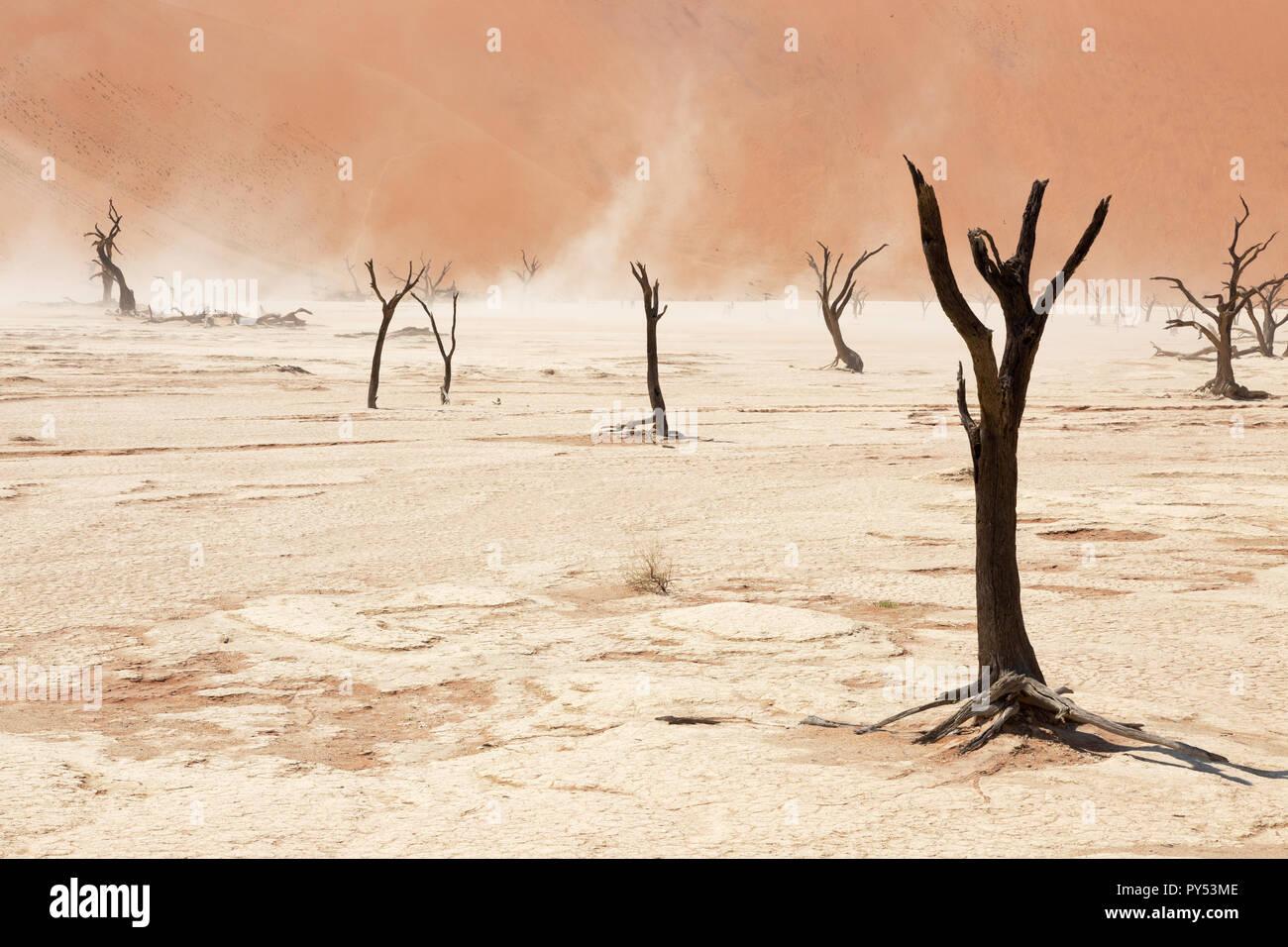 Deadvlei Namibie Afrique du Sud - le vent remue le sable et le sel parmi les arbres morts, Deadvlei, Sossusvlei, Désert du Namib, le Namib Naukluft National Park, Namibie Banque D'Images