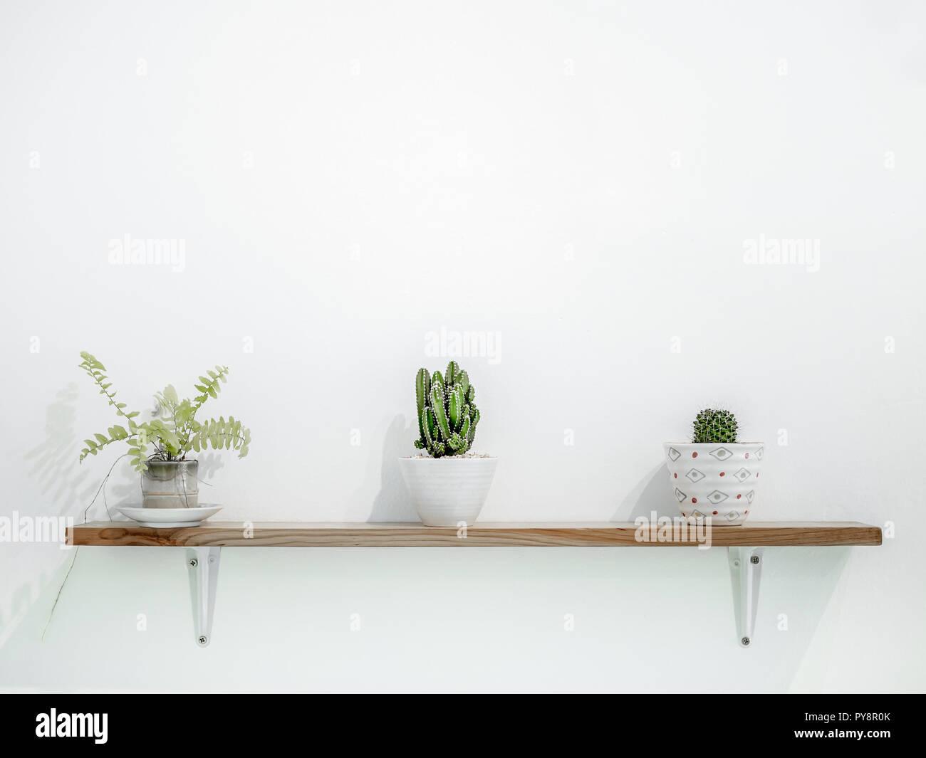 https www alamyimages fr petit cactus en pots mignon sur etageres en bois sur mur blanc avec copie espace style minimaliste decoration design image223313795 html